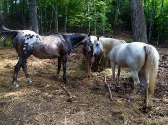 equine rescue plainfield ct